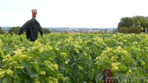 En Chemin, vigne et Troyes au loin