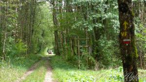Les marais de la Saône - Une roulotte de découverte