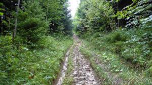 Chemin boueux