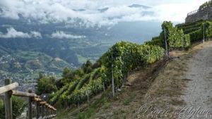 Les vignes du Val d'Aoste