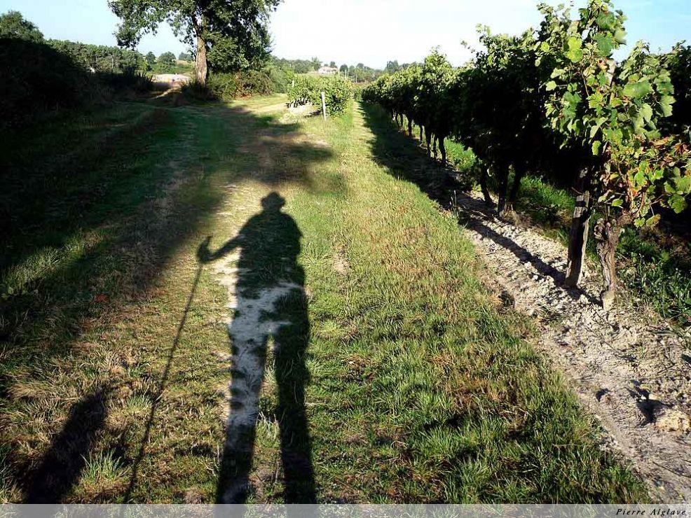 Chemin à travers les vignes vers Nogaro