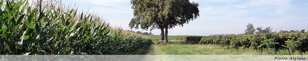Le Chemin entre maïs et vignes