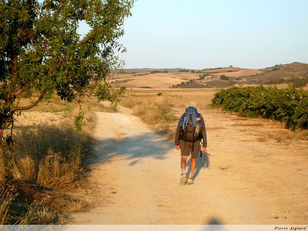 Le chemin entre vignes et oliviers
