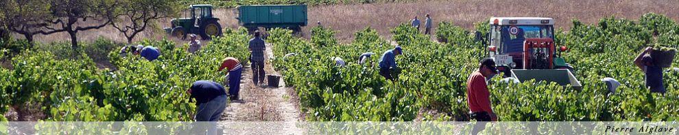 Vendanges dans la région du Rioja