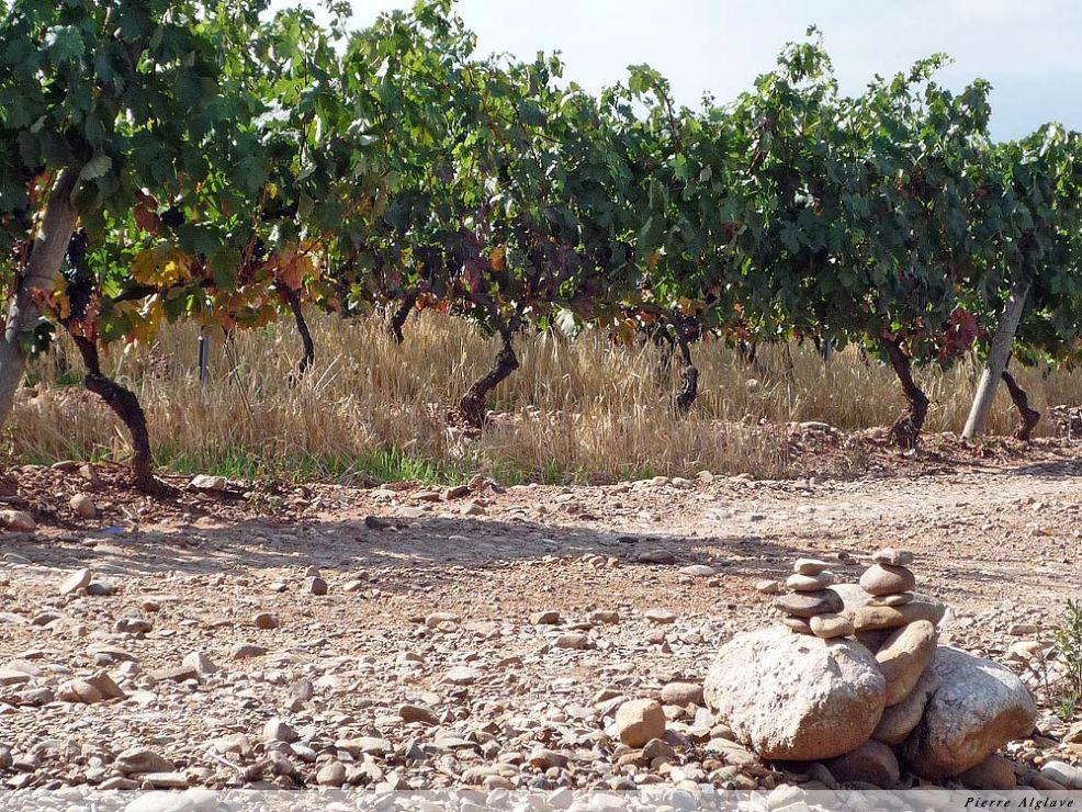 Les vignes de la Rioja