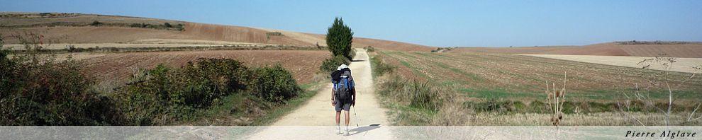 Le chemin, sans arbre ou presque