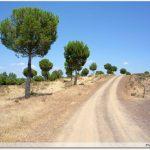 Parc forestier El Berrocal