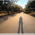 Chemin à travers les chênes liège