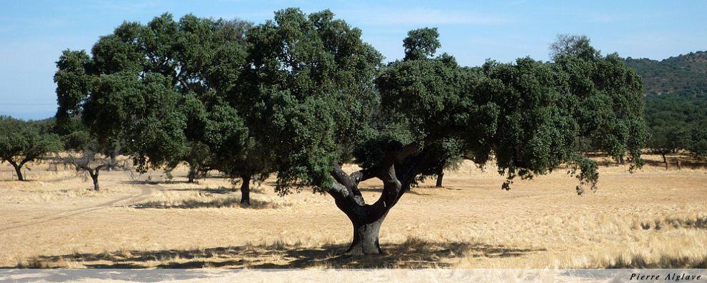 Un arbre magnifique