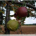Fruits ou parasites ?