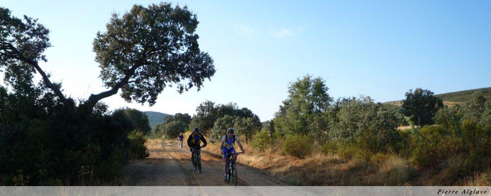 Compagnons cyclistes