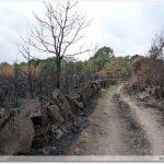 Traversée d`une zone incendiée