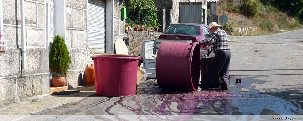 Lavage viticole