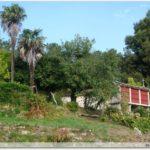 Horreos et palmier